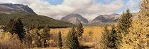 Trees in a field, US Glacier National Park, Montana, USA by Panoramic Images