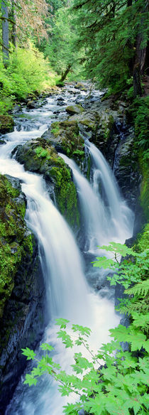 Sol Duc Falls Olympic National Park WA von Panoramic Images