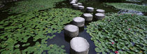 Water Lilies In A Pond, Helan Shrine, Kyoto, Japan by Panoramic Images