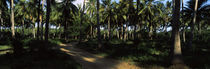 Palm trees in a forest, Watamu, Coast Province, Kenya by Panoramic Images