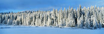 Winter Wawona Meadow Yosemite National Park CA USA von Panoramic Images