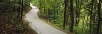 Empty road running through a forest, Stuttgart, Baden-Württemberg, Germany von Panoramic Images