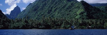 Trees on the coast, Tahiti, French Polynesia by Panoramic Images