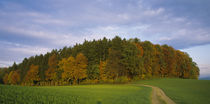 Trees in a field, Aargau, Switzerland by Panoramic Images