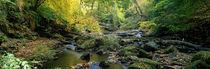 Stream Flowing Through Forest, Eller Beck, England, United Kingdom von Panoramic Images