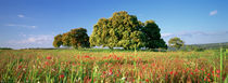 Flowers in a field, Andalusia, Spain von Panoramic Images