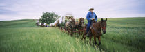 Historical reenactment of covered wagons in a field, North Dakota, USA von Panoramic Images