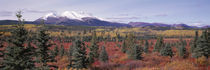 Canada, Yukon Territory, View of pines trees in a valley von Panoramic Images