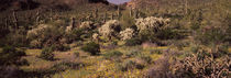 Organ Pipe Cactus National Monument, Arizona, USA by Panoramic Images