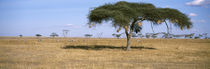 Serengeti National Park, Tanzania by Panoramic Images