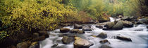 River passing through a forest, Inyo County, California, USA by Panoramic Images