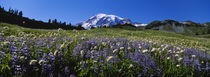 Wildflowers On A Landscape, Mt Rainier National Park, Washington State, USA by Panoramic Images