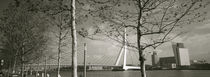 Bridge Over A River, Erasmus Bridge, Rotterdam, Netherlands by Panoramic Images