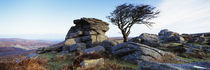 Bare tree near rocks, Haytor Rocks, Dartmoor, Devon, England von Panoramic Images