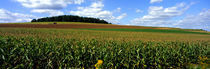Field Of Corn With Tractor In Distance, Carroll County, Maryland, USA by Panoramic Images