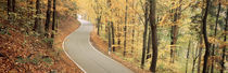 Autumn trees along a road, Germany von Panoramic Images