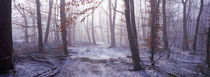 Forest in winter at dawn, Bavaria, Germany by Panoramic Images