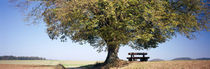 Empty bench under a tree, Baden-Wurttemberg, Germany by Panoramic Images