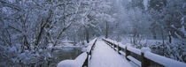 Trees along a snow covered footbridge, Yosemite National Park, California, USA von Panoramic Images