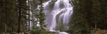 Waterfall in a forest, Banff, Alberta, Canada von Panoramic Images