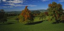 Panorama Print - Luftaufnahme von Birnbäumen auf einem Feld in der Schweiz  von Panoramic Images