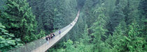 Capilano Bridge, Suspended Walk, Vancouver, British Columbia, Canada von Panoramic Images