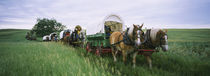 Historical reenactment, Covered wagons in a field, North Dakota, USA von Panoramic Images