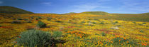 Mojave Desert, California, USA by Panoramic Images