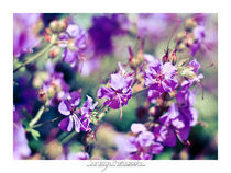 Colors of Nature by sarajean-photography