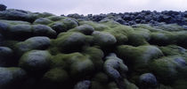 Close-up of moss on rocks, Iceland by Panoramic Images