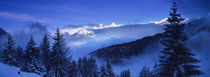Trees on a polar landscape, Simplon Pass, Switzerland by Panoramic Images