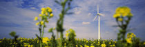 Low Angle View of Oilseed rape flowers and a wind turbine in a field, Germany von Panoramic Images