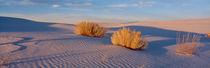 USA, New Mexico, White Sands, sunset by Panoramic Images