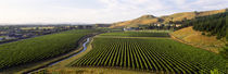 Mission Vineyard, Hawkes Bay North Island, New Zealand von Panoramic Images