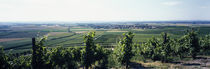 Vineyard, Bereich Steigerwald, Franconia, Germany by Panoramic Images