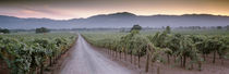 Road in a vineyard, Napa Valley, California, USA von Panoramic Images