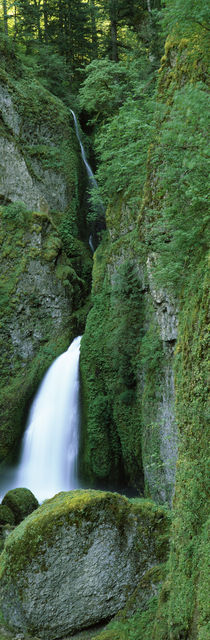 Waterfall in a forest, Columbia River Gorge, Oregon, USA by Panoramic Images