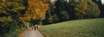Black Forest, Baden-Wurttemberg, Germany by Panoramic Images