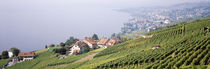 Vineyards, Lausanne, Lake Geneva, Switzerland von Panoramic Images