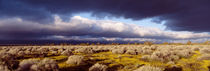 Clouds, Mojave Desert, California, USA von Panoramic Images