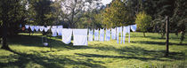 Clothes drying on a clothesline in a backyard, Baden-Württemberg, Germany von Panoramic Images