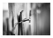 Patio Light von sarajean-photography