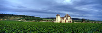 Panorama Print - Grand Cru Weinberg, Burgund, Frankreich von Panoramic Images