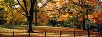 Trees in a forest, Central Park, Manhattan, New York City, New York, USA von Panoramic Images