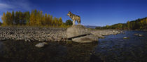 Wolf standing on a rock at the riverbank, US Glacier National Park, Montana, USA von Panoramic Images
