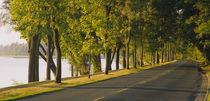 Trees along a road, Lake Washington Boulevard, Seattle, Washington State, USA by Panoramic Images