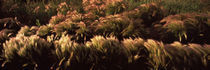 Plants in a forest, Crested Butte, Gunnison County, Colorado, USA by Panoramic Images
