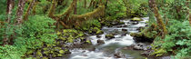 Creek Olympic National Park WA USA von Panoramic Images