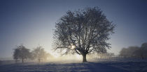 Cherry tree on a snow covered landscape, Aargau, Switzerland by Panoramic Images