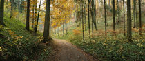 Road passing through a forest, Baden-Wurttemberg, Germany by Panoramic Images